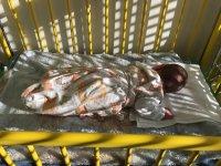 Egészséges kisfiút helyeztek a kecskeméti kórház csecsemőmentő inkubátorába