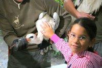 Gólyák, egerészölyv, fülesbagoly és sün gyógyultak és cseperedtek fel a Kecskeméti Vadaskertben