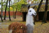 Új állatok érkeznek a Kecskeméti Vadaskertbe és a játszótér is megszépül jövőre
