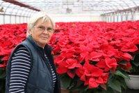 Színterápia Hetényegyházán: mikulásvirág-csodák a Kovács Kertészetben